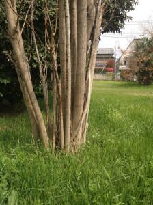 近所の公園の横の空き地だった場所。最近売られて何かが建つみたい。大金もちだったら買い占めてそのままの空き地にしておきたい。